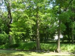 Zámecký park - Borsodivánka  Borsodivánka